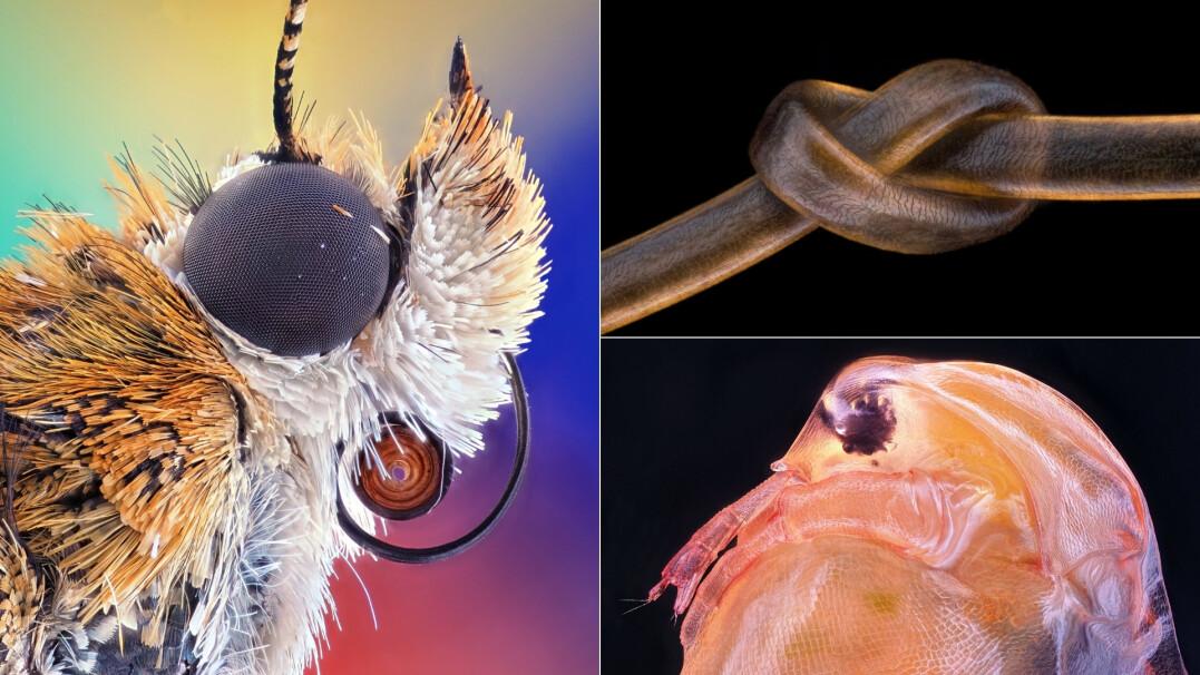 Niezwykły świat pod mikroskopem. Oto najlepsze zdjęcia makro z ostatniego roku