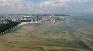 Sinice w Bałtyku. Stanowią zagrożenie dla zdrowia