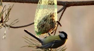 Jak przygotować zdrowe i pożywne jedzenie dla ptaków?
